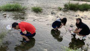 在山中的小溪有很多魚蝦